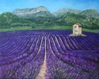 provence-2-lavandel