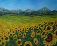 provence-3-zonnebloemen
